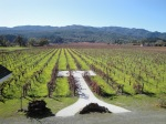 Kronos Vineyard from the 2nd Story of the Barn